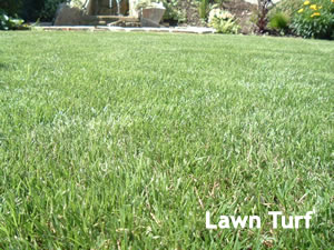 summerhill Lawns_lawn_turf